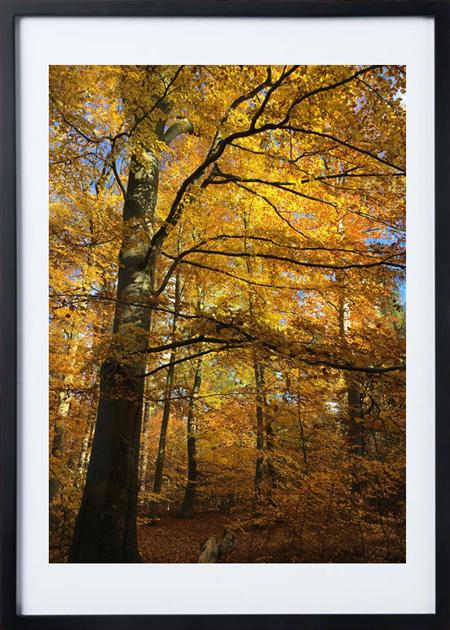 Naturplakat af efterårets farver