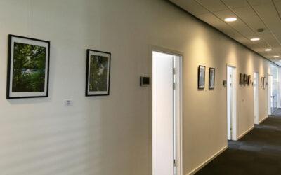 Juni udstilling med naturkunst og malerier hos SDC